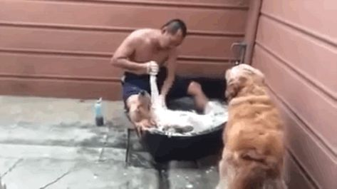 This Dog Getting Scrubbed At The Dog Spa Is More Pampered Than You Ll Ever Be Dog Spa Dogs Relaxed Dog