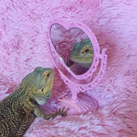 Image uploaded by 。・:*:・゚★,。・:*:・゚☆. Find images and videos about cute, pink and aesthetic on We Heart It - the app to get lost in what you love. Baby Animals, Funny Animals, Cute Animals, Crazy Dog, Bearded Dragon, Reaction Pictures, Amphibians, Reptiles, Pet Care