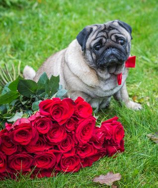 Photos Of Poisonous Plants And Flowers For Dogs Poisonous Plants Dogs Plants