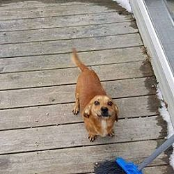 Pin By Terry Gorman On Please Take Us Home Dachshund Mix Pets
