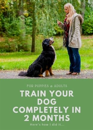 Dog Training Facility Dog Training Oregon Dog Training 91344