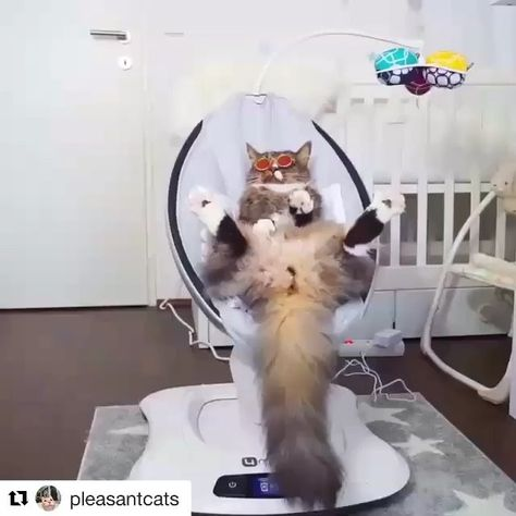 "#Repost @pleasantcats ・・・ 📹 from @hello_iamjoy ""I just thought I'd show my new friends how cool I can be 😎"" #pleasantcats"