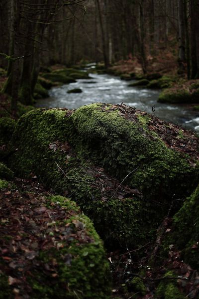 damp and mossy