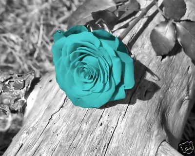 Black And White Background With A Teal Blue Rose