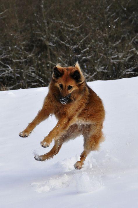Hello, December! ❄ . . . #sitmeanssit #sitmeanssitdogtraining #sitmeanssitsgv #dogtrainingglendora #dogtrainingsangabrielvalley #outdoordog #snowdogs #campingwithdogs #hikingwithdogs #dashingthroughthesnow #dogsonadventures #hikingdogsofinstagram #dogsthatexplore #traildog #thegreatoutdogs #backcountrypaws #livelifeoffleash #nationalparkpaws #doginsnow #dogsinsnow #dogsinthesnow #doginthesnow