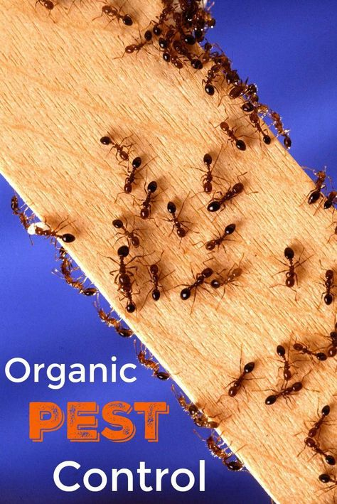 Organic Pest Control: A Guide for Protecting Your Home and Family This Summer | Home Maid Simple