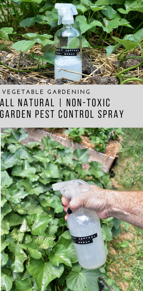 Garden Pest Control Spray - Rocky Hedge Farm