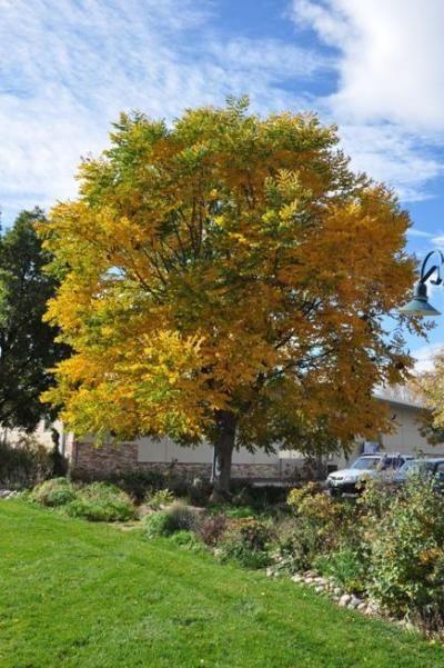 Mobile Web - Lifestyle - Colorado planting calls for