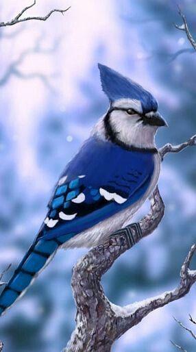 BLUE JAY Glossy 8x10 Photo Animal Print Winter Poster Wildlife Bird Canada