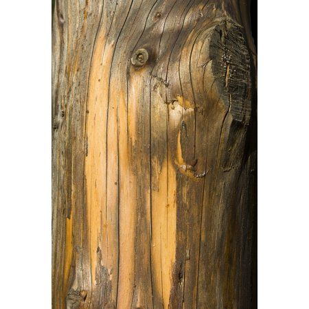 Laminated Poster Log Wood Texture Structure Tree Bark Bark Poster
