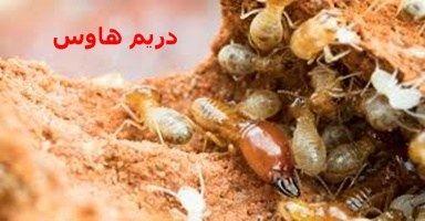 النمل الأبيض أو الأرضة هو من أكثر الحشرات التي تسبب إزعاج وخطرا كبيرا لأي منزل فالنمل الأبيض يستطيع تدمير أثاث المنزل مع الوقت فقد يبدأ بت Food Chicken Meat