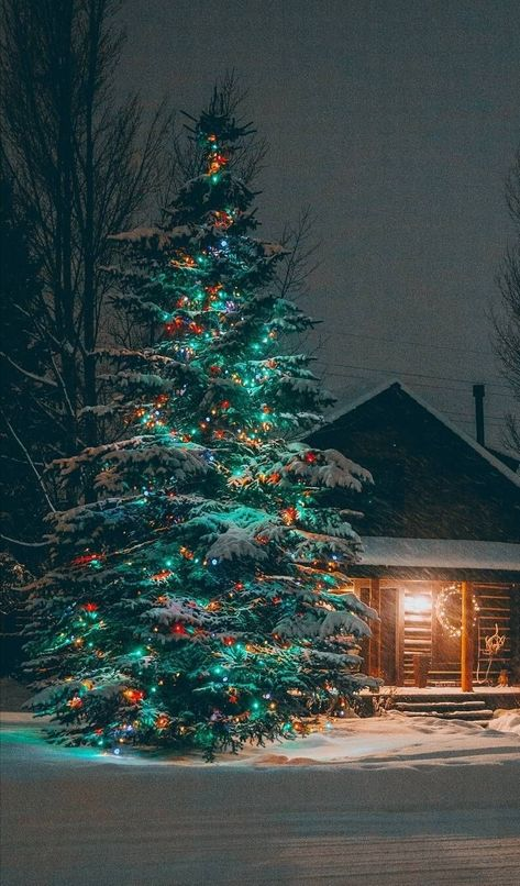 Something about Christmas lights with snow....