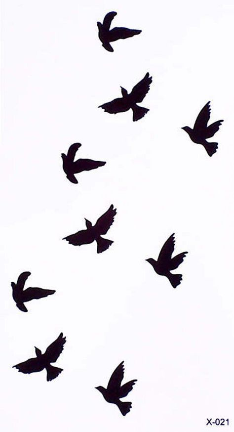Shadow Bird Photo Nature 4 x 6  Photograph Great for Scrapbook Craft Home Decor