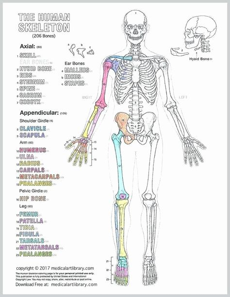 Human Anatomy Drawing Book Pdf Free Download Em 2020 Com Imagens