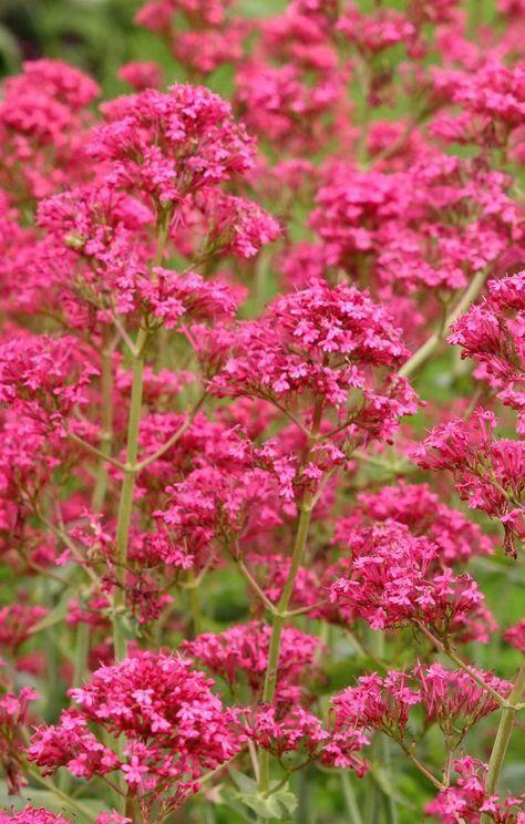 Pflanzen Fur Trockene Und Sonnige Standorte Blumen Fur Garten Pflanzen Bepflanzung
