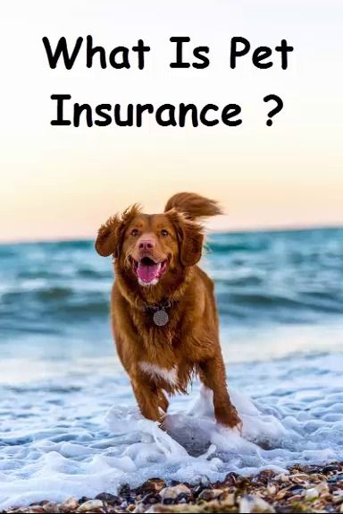 What Is Pet Insurance And How Choose The Best Pet Insurance In 2020 Dog Insurance
