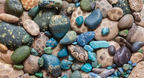 Michigan rock hunting is a passion unlike anywhere on Earth, because we have the best darn beaches anywhere on Earth. Experts share tips, facts and more. Michigan Vacations, Michigan Travel, Lake Michigan, Rock Identification, Rock Hunting, Lake Superior Agates, Petoskey Stone, Fort Myers Beach, Rock Collection