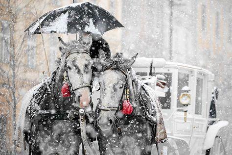 Krakow, Poland: a horse-drawn carriage rides through heavy snowfall