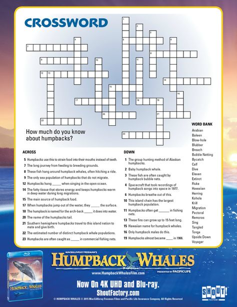 Whale Group Crossword : whale, group, crossword, Printable, Coloring, Pages,, Crafts