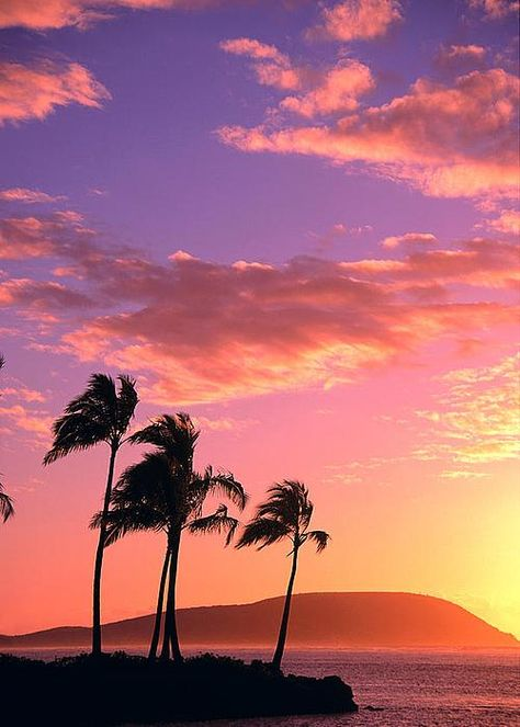 Tropical Sunrise Greeting Card by Tomas del Amo - Printscapes