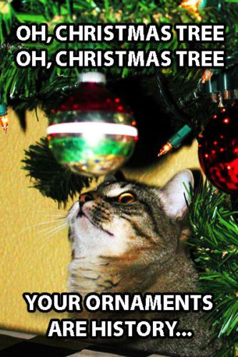 Funny Cat Fridge Toolbox Magnet 2 X 3 Christmas Tree Song Ornaments History Funnycats Funnymemes Funnypictures Catmeme Funny Cats Cats Cat With Blue Eyes