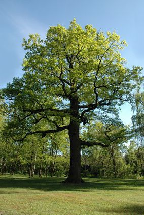 Pin On Tree