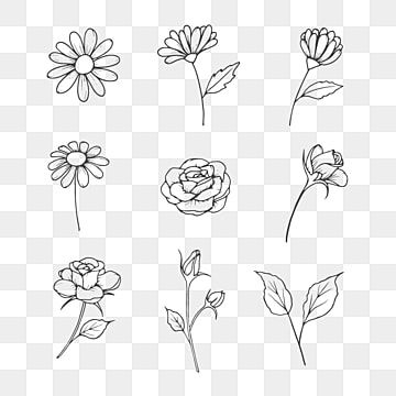 Hand Drawn Flowers And Leaf Illustration In Black And White Line Art Style Art Black Blooming Png Transparent Clipart Image And Psd File For Free Download Flower Line Drawings Flower Drawing