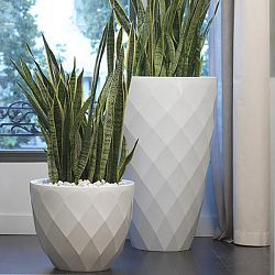 Black planter squares up sleek and modern. Protected for indoor ...