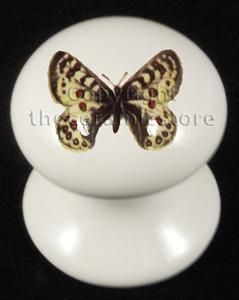 19 best Butterfly + Bird Designs Ceramic Door & Cupboard Knobs ...
