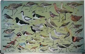 Hedendaags vogels schoolplaat - Google zoeken (met afbeeldingen) | Vogels QO-17