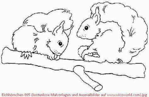 32 Ausmalbilder Tiere Im Wald Eichhörnchen - Besten Bilder