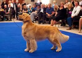 Image Result For Laura Jill Simmons Dogs Golden Retriever