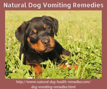Natural Dog Vomiting Remedies Dogs Dog Coughing Purebred
