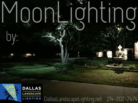 Moonlighting tree lighting dallas landscaping and lights aloadofball Image collections
