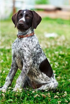 How To Train Hunting How To Train Hunting Dogs Multi Color