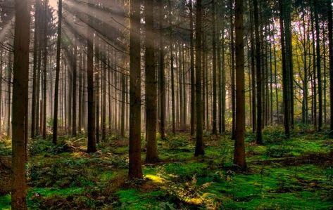 Bosque; Qué son, ubicación geográfica y tipos de bosques