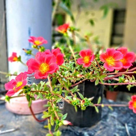 season #flower #flora #nature #floral...