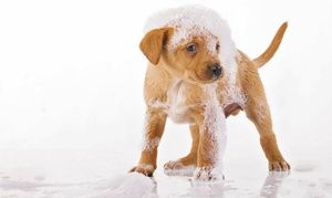 Three Or Six Self Serve Dog Washes At Pet Valu Up To 60 Off Dog Wash Oatmeal Bath For Dogs Dog Grooming