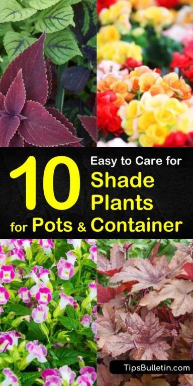 10 Easy To Care For Shade Plants For Pots Container Plants Guide Potted Plants Outdoor Potted Plants Patio Best Plants For Shade
