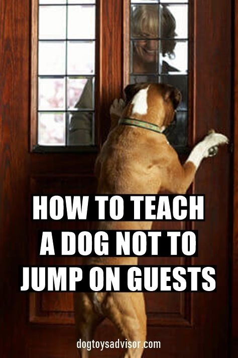 Do You Want To Teach Your Dog Stop Jumping On People For Many
