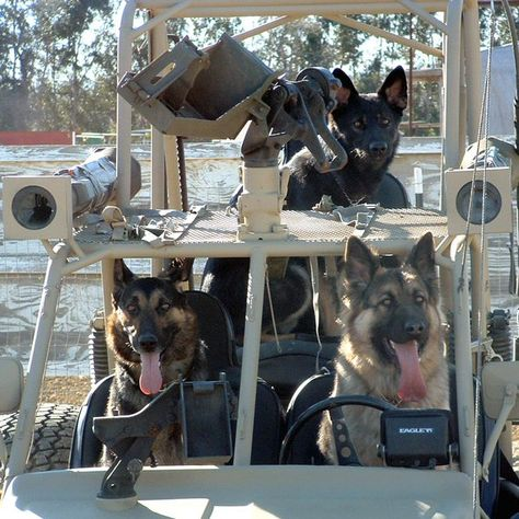 Military working dogs. Thanks for your service!