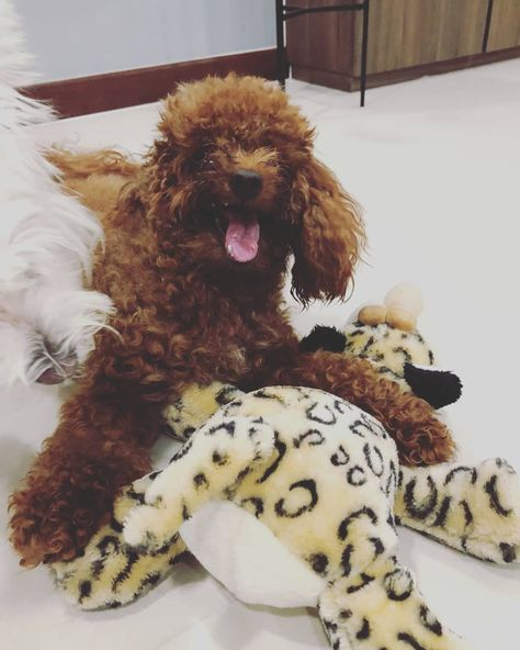 How many pictures do you need human?   ===>Follow us For More Updates!!    #dogs_of_world #dogmodel #cutevideos #puppypower #dogofig #dogspuppy #puppypaws #dogsofinstagram #puppymodel #ilovemyp... Happy #Friday everyone! #TGIF! . . #YourPetPartner #fridayfunday #fridayvibes #fridaymood #fridayfeels #dogsbeingfunny #... #labrador_mob #labradorblelove #labradorfinstagram #labradorf...