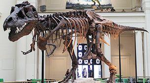 Museo Americano De Historia Natural Tyrannosaurus Tyrannosaurus Rex Dinosaur