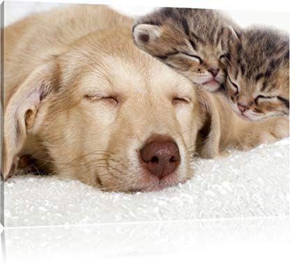 katzchen und hund schmusend format 60x40 cm auf leinwand xxl riesige bilder fertig gerahmt mit keilrahmen kunstdr dog background animals kittens and puppies leinwände bedrucken lassen