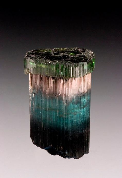 Crowned with a green cap or scepter, this zoned Tourmaline transitions from deep blue to a lighter blue then to a pink layer showing chatoyancy.
