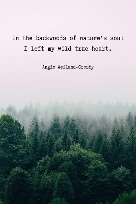 Nature Lover Quotes