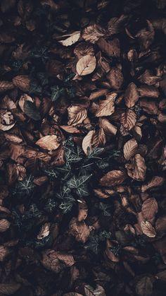 15 Gorgeous Happy Fall Iphone X Wallpapers Fondos Fondos
