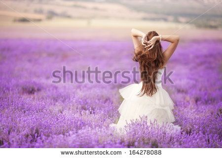 stock-photo-beautiful-bride-in-wedding-day-in-lavender-field-newlywed-woman-in-lavender-flowers-young-woman-164278088.jpg (450×320)