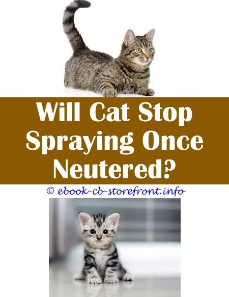 5 Efficient Hacks How To Make Neem Oil Spray For Cats Can Women