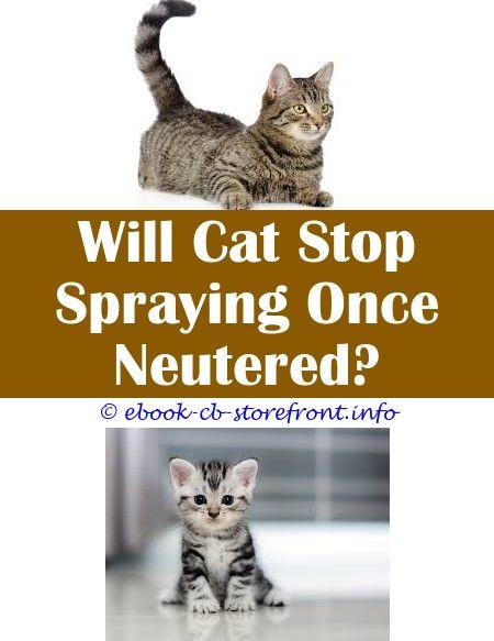 Older Cat Spraying Citrus